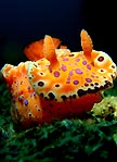 Sea Slug On The March!