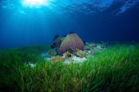 Magical seagrass