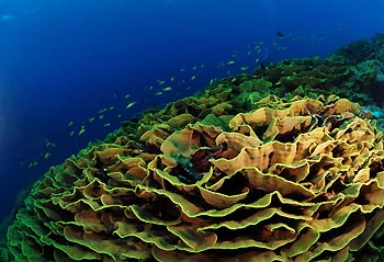 Cabbage Patch - Cocos Keeling Islands, Western Australia