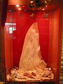 Shark fins on display. Photo by Sun Tung Lok BOZZ