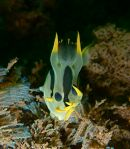 Bryozoan Brunch