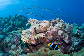 Coral Garden - Protect our Coral Sea Campaign