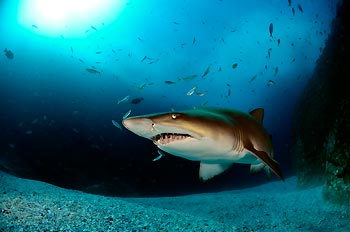 WINNER - SHARKS - Peter Hitchins - 7-night dive package at Tawali Resort for ONE