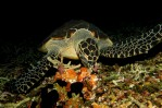 Yummilicious Sponges
