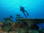 Diver over Fiji Reef