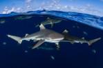 Sharks'n'Sky