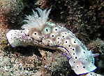Nudibranch at Orpheus Island