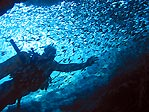 Diver enveloped by bait fish