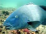 My friend Bluey