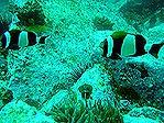 Anemone Bay