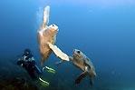 Turtle Tustle