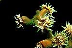 Coral Feeding