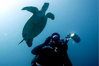 Turtle and photographer