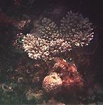 Coral Portrait