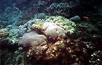 Coral Bed, Flinders Reef