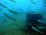 HMAS Brisbane - bow anchor winch