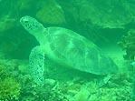 Turtle Ahoy