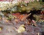 It's just a shrimp's life
