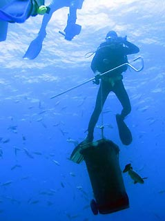 Diver with Shark tucker