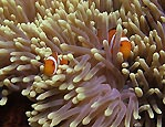 Get back in here, Nemo!