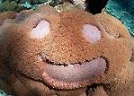 Underwater Koala