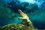 Croc Downunder