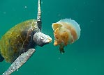 Hungry Hungry Turtle