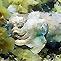 Whyalla Cuttlefish Trip 2006