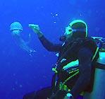 Jellyfish in Vanuatu