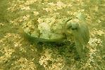 Cuttlefish Camo