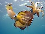 Squid on display