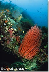 Abundant growth on one of the reefs, Bali