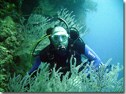A diver looking at the dense coral growing every where. Uepi, Solomon Islands