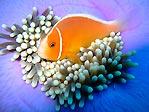 Anemone Protection