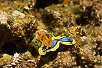 Nudibranch Posing