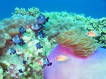Vietnam Reef
