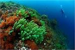 Raja Ampat Coral Garden