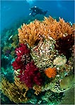 Corals at Raja Ampat