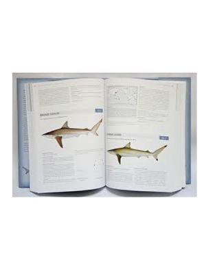 Sharks and Rays of Australia