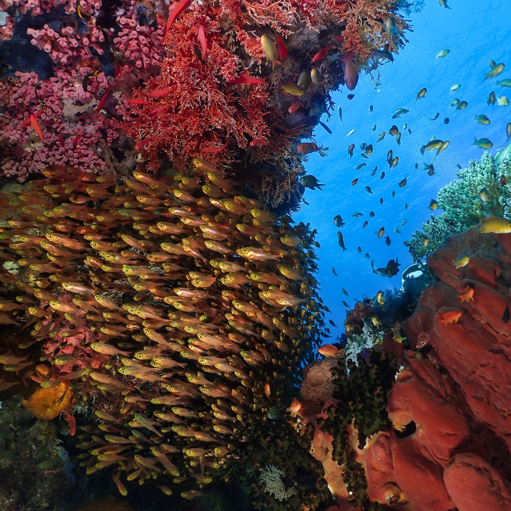 Halmahera - colourful coral reef wall