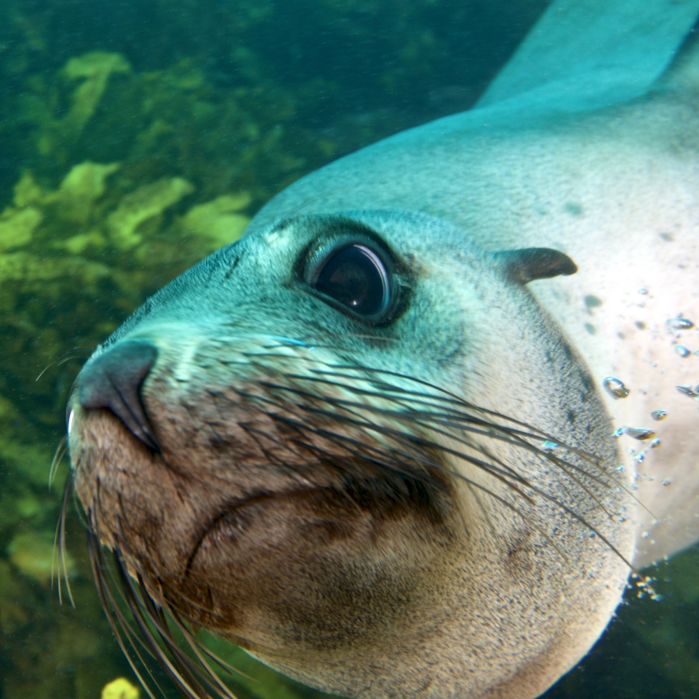 Fur seal, up-close and personal