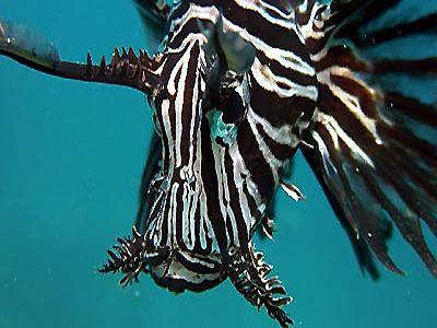 Gangga Island Sulawesi - Diving in Paradise