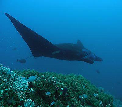 Escaping to Kadavu - A Fiji Secret