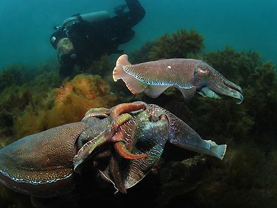Whyalla - Cuttlefish Mating Mecca and More