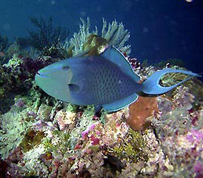 Wakatobi - a Diving Adventure in Sulawesi