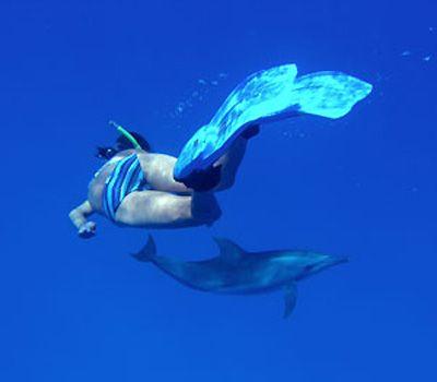 Shark Attacks in Perspective
