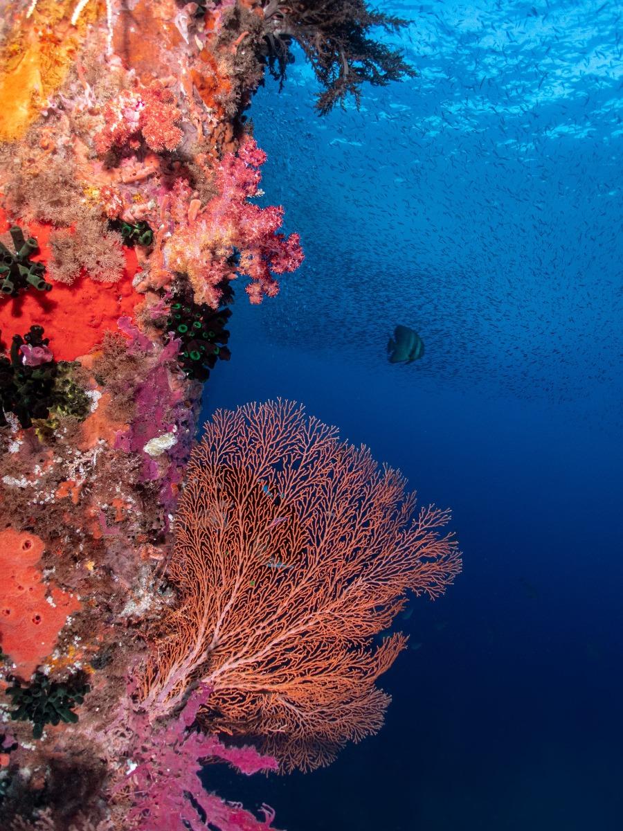 Alor Archipelago, East Nusa, Indonesia