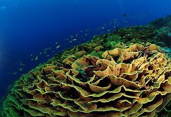Cabbage Patch - Cocos Keeling Islands, Western Australia
