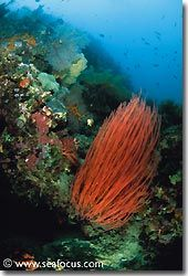 Abundant growth on one of the reefs, Bali