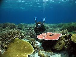 Cyclone Reef - an outer reef at Oro, Papua New Guinea